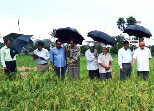 BRAC experiments with fast-growing, high-yielding rice varieties